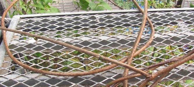 高尾の自然の木の実・葉っぱのリース作り